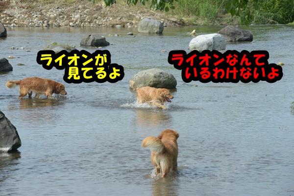 DSC_3221.jpg