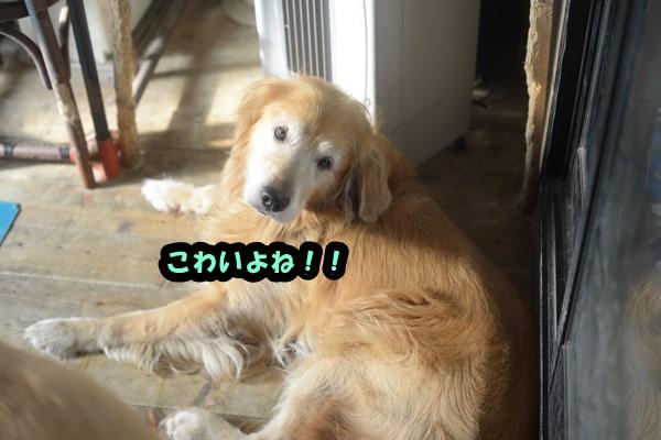 DSC_7603_201409112335128c0.jpg