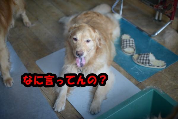 DSC_8685_201406252314555e0.jpg