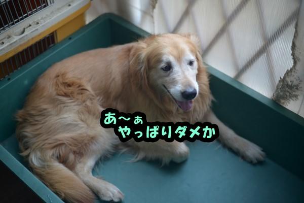 DSC_8689_201406252314536e4.jpg