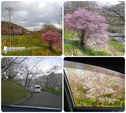 s-451-1車窓桜