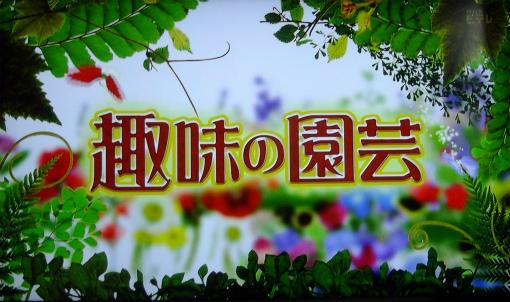 s-468-2TV趣味の園芸