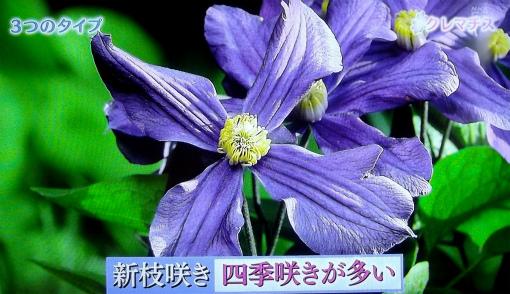 s-468-4新枝咲