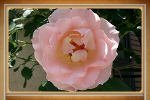 fc2_2014-05-13_17-35-48-433.jpg