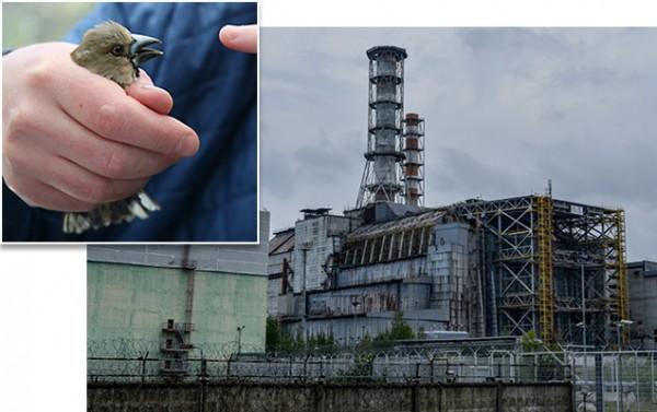 sn-chernobyl.jpg