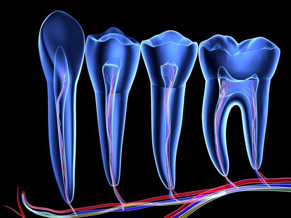 sn-teethH.jpg