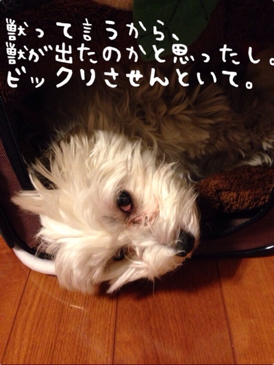 fc2blog_2014031518284629c.jpg