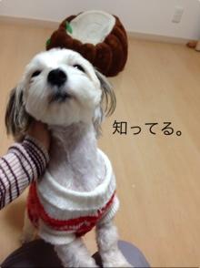 fc2blog_20140411204737869.jpg