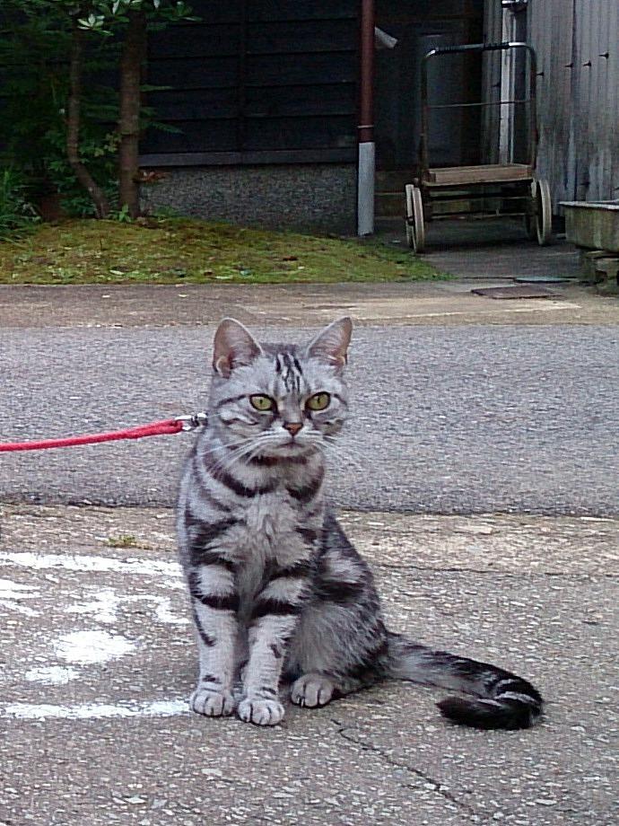 Cat-Arry_20140629-01.jpg
