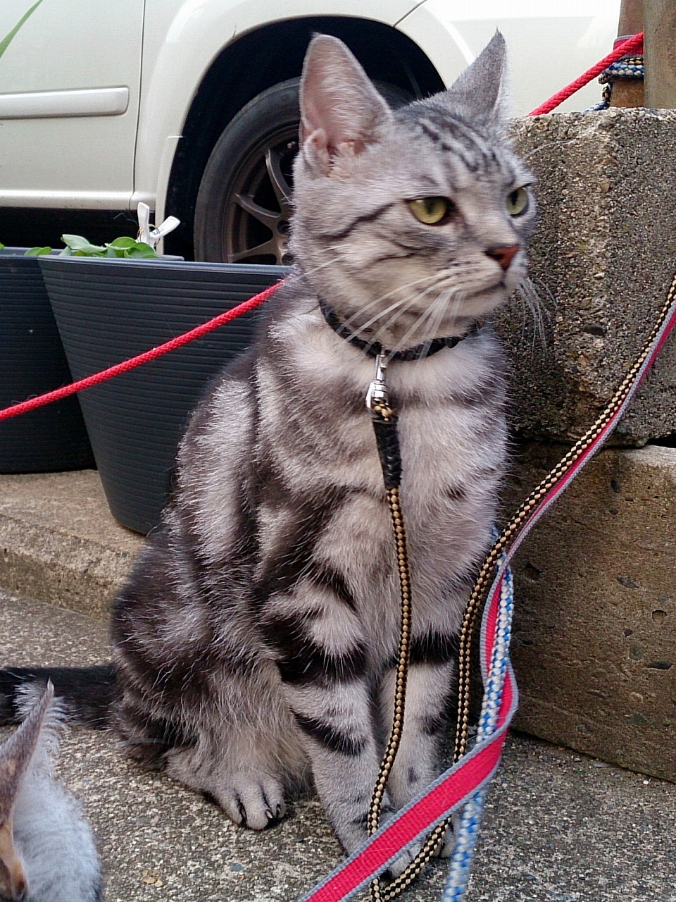 Cat-Totoro_20140629-10.jpg
