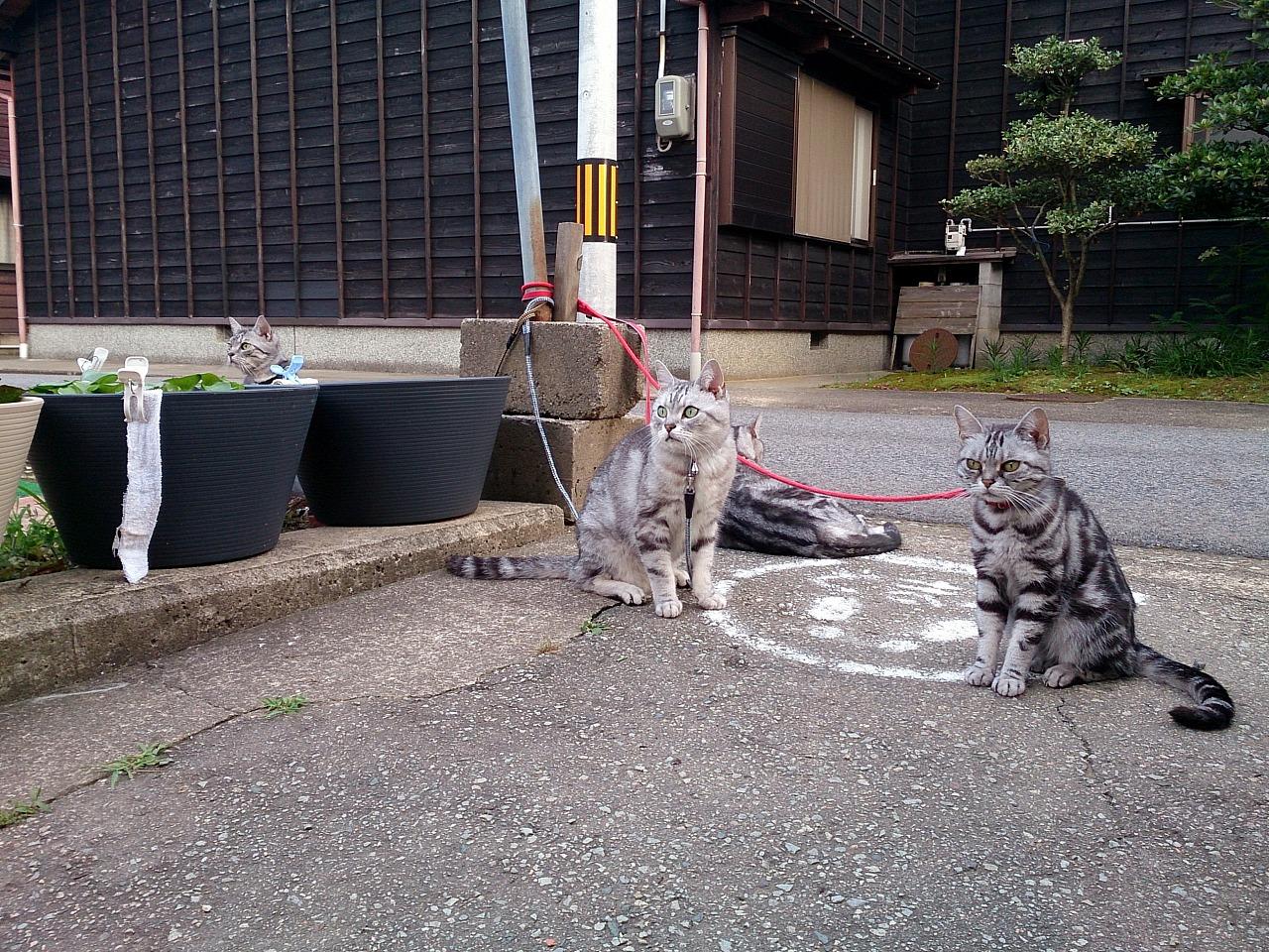 Cats_20140629-02.jpg
