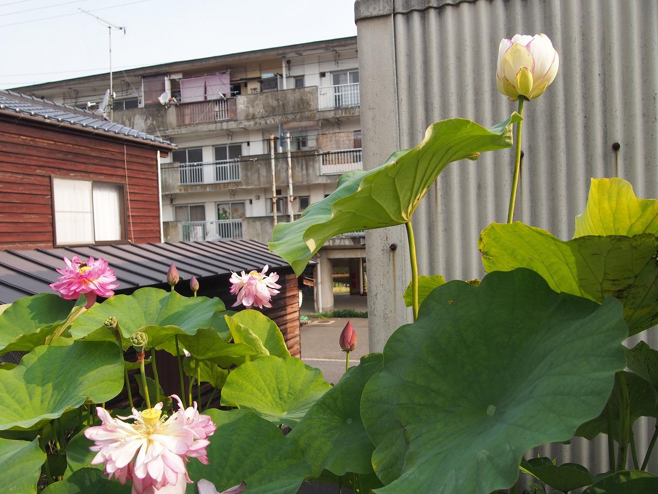 Ittenshikai-01_20140722.jpg