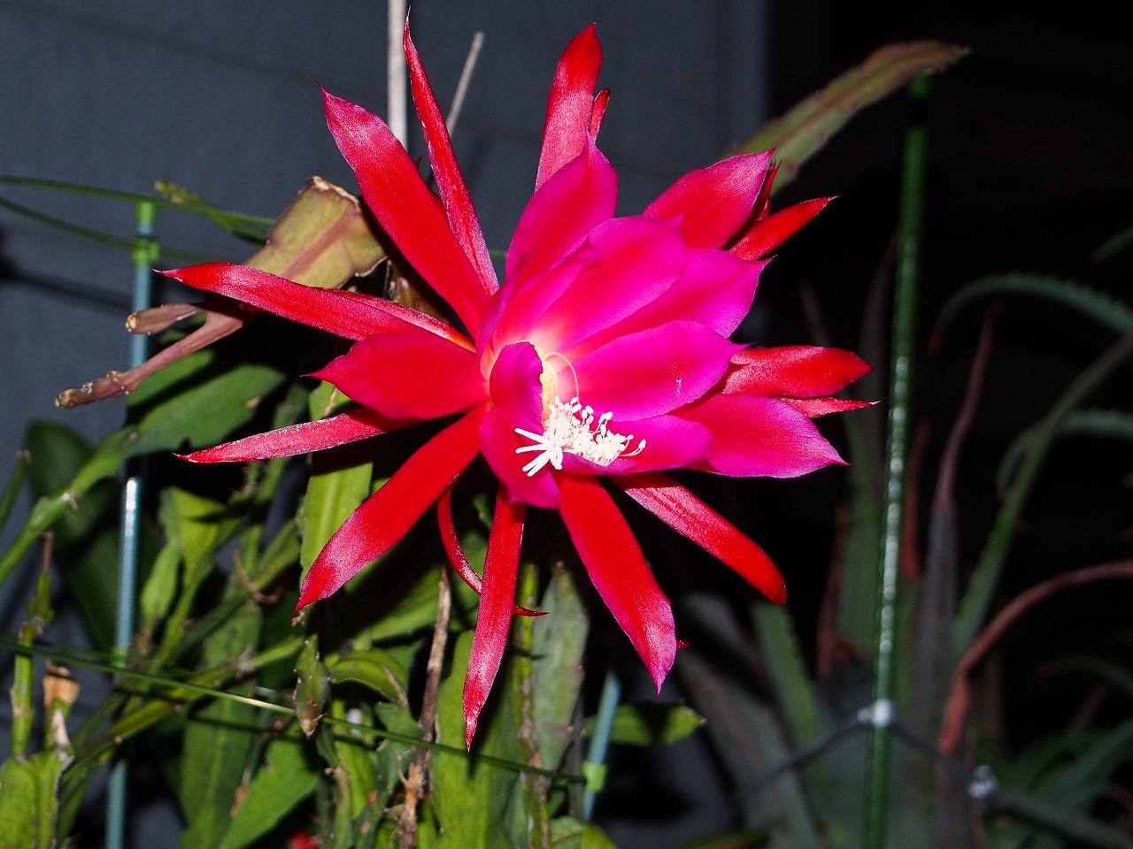 KujakuSaboten-RED_20140620-02.jpg