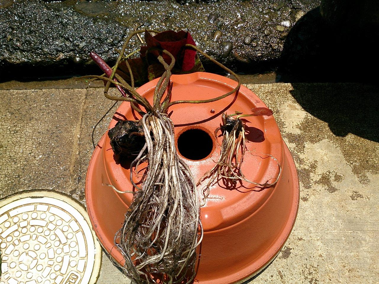 Planting-02_20140712.jpg