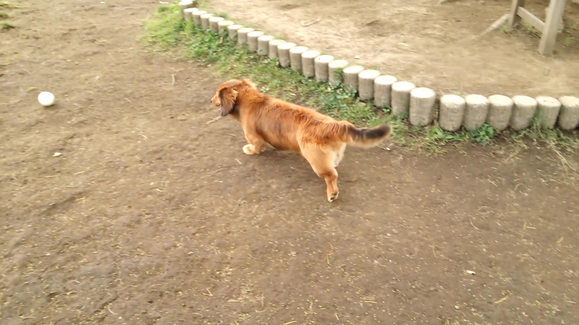 dachshund1.jpg