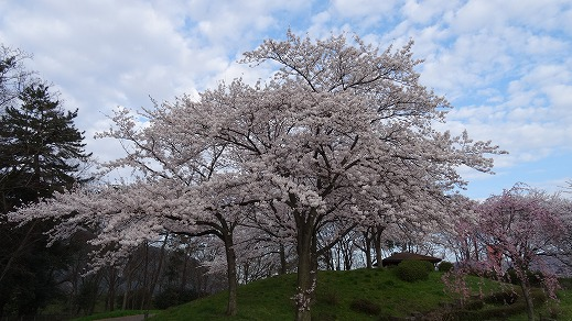 岐阜に花見旅行 (2014年4月)
