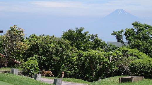 天城高原ゴルフコースと箱根観光 (2014年7月)