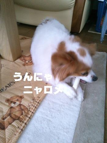 KIMG0599-1.jpg