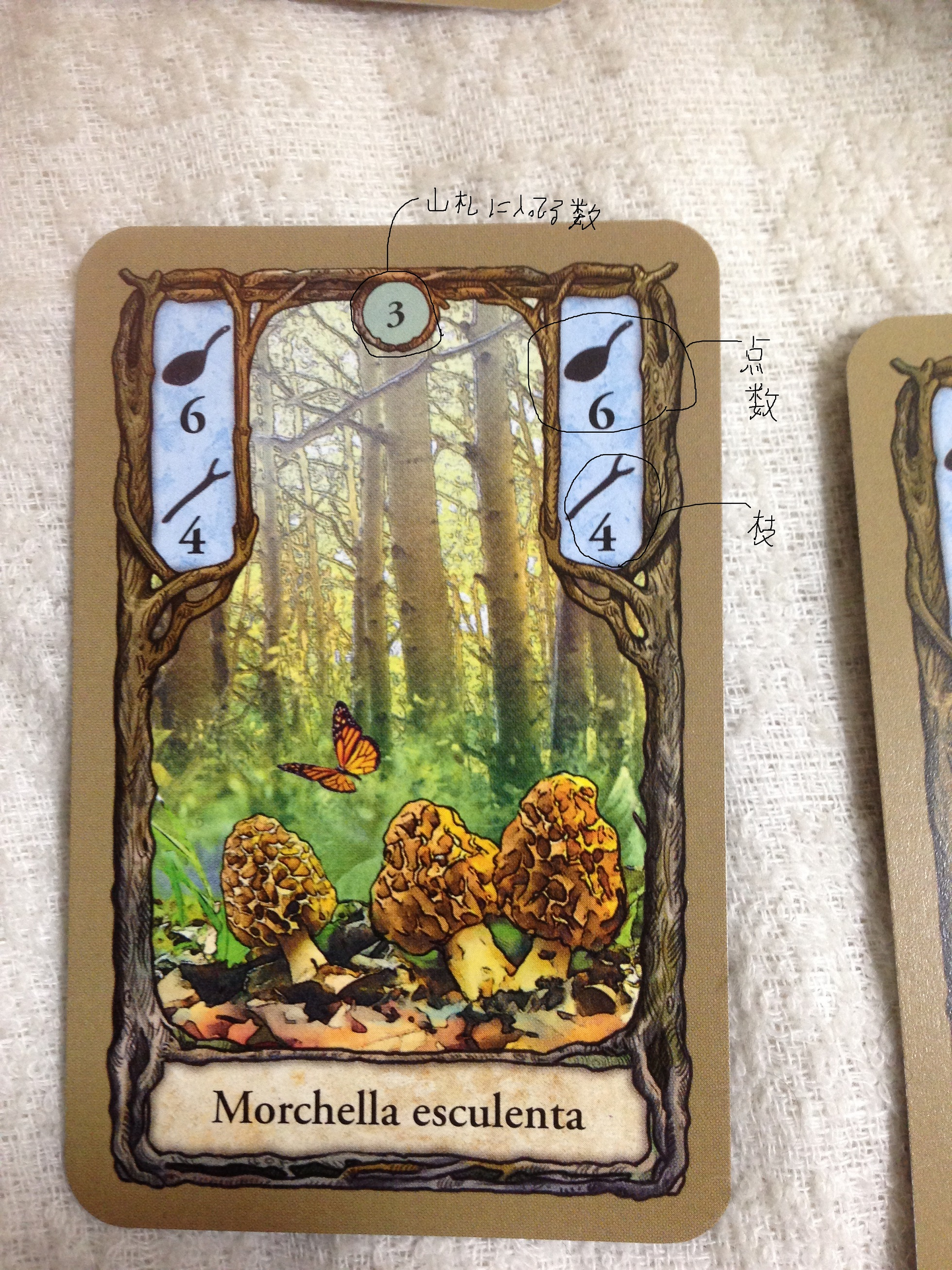 Fungi2.jpg